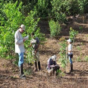 Inea institui o Sistema Estadual de Monitoramento e Avaliação da Restauração Florestal