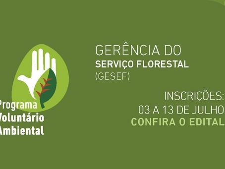 Inscrições abertas para Voluntário Ambiental da Gerência do Serviço Florestal do Inea