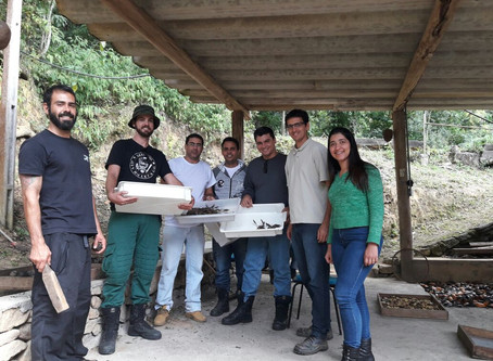 Inea realiza curso de Georreferenciamento de Matrizes Florestais
