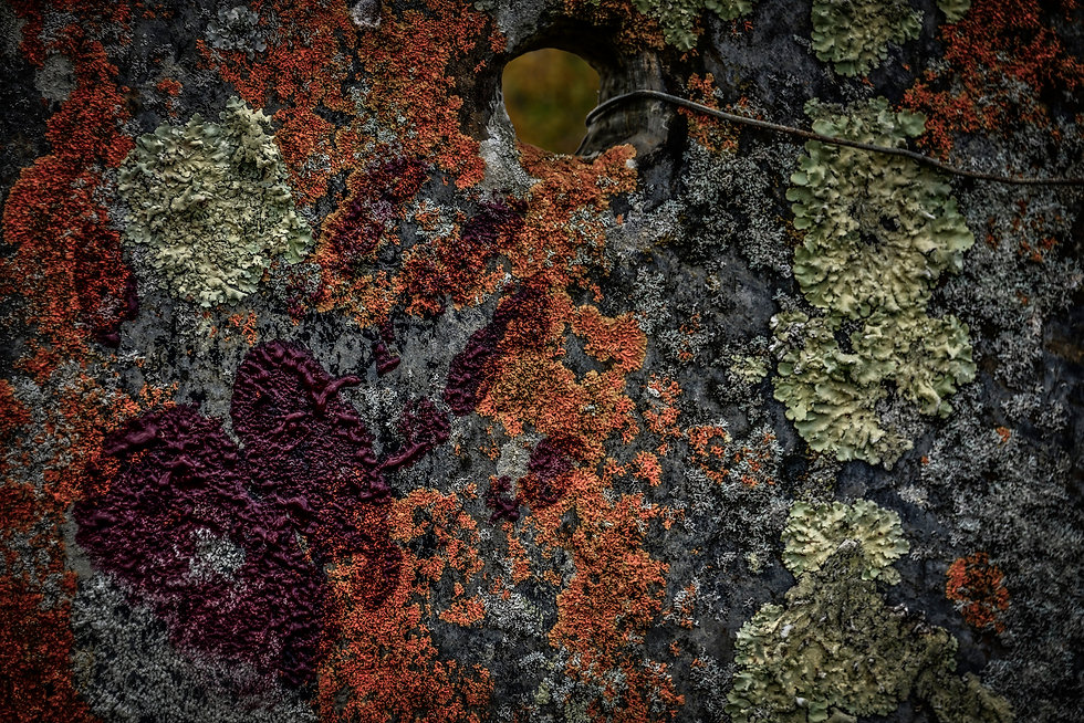 Ardoise avec Lichens 22 juillet.jpg