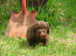 PuppiesandDawson014