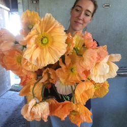 Poppie  Colibri Rosa Chiaro (Thank you Flower Flower Farm).jpg