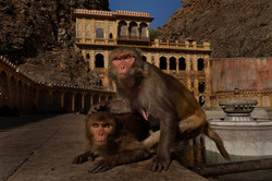 Monkey Temple (Galwar Bagh), Jaipur