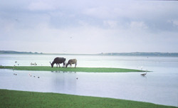 Yala National Parc