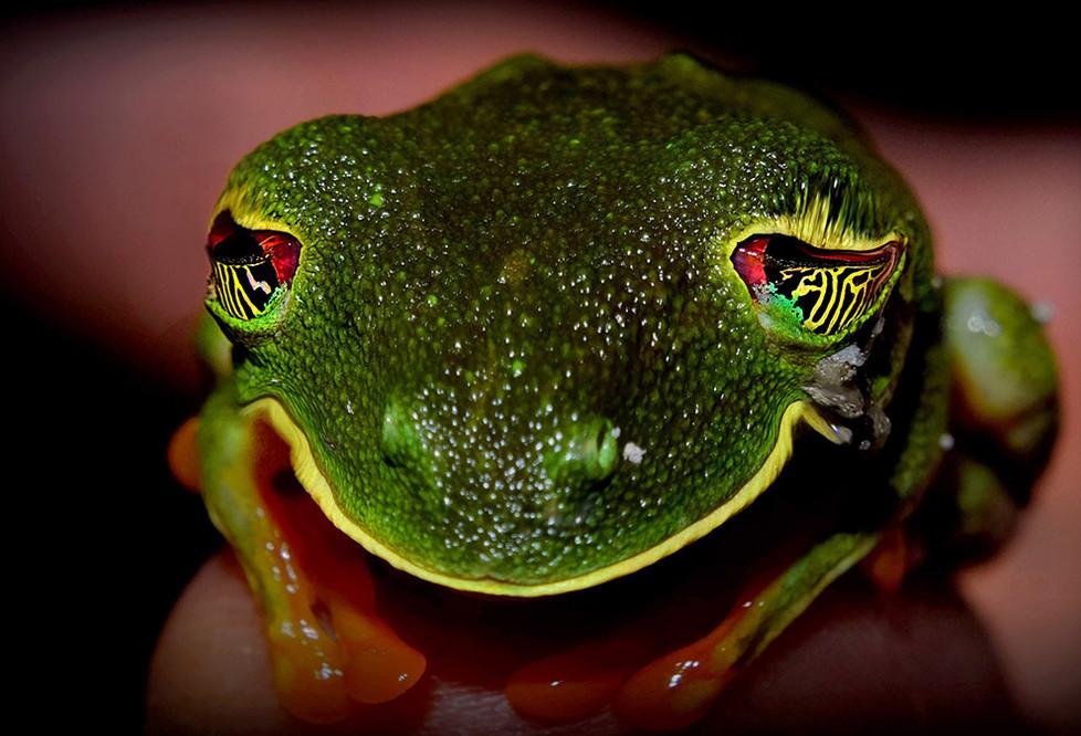frosch fasnet.jpg