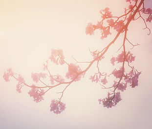 pink trumpet flower and branch on sky wa