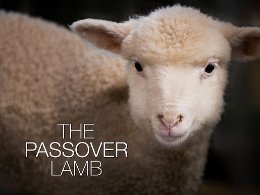 The Blood of a Lamb