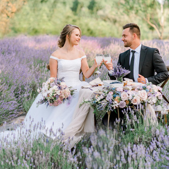 Lavender field in Rogerville