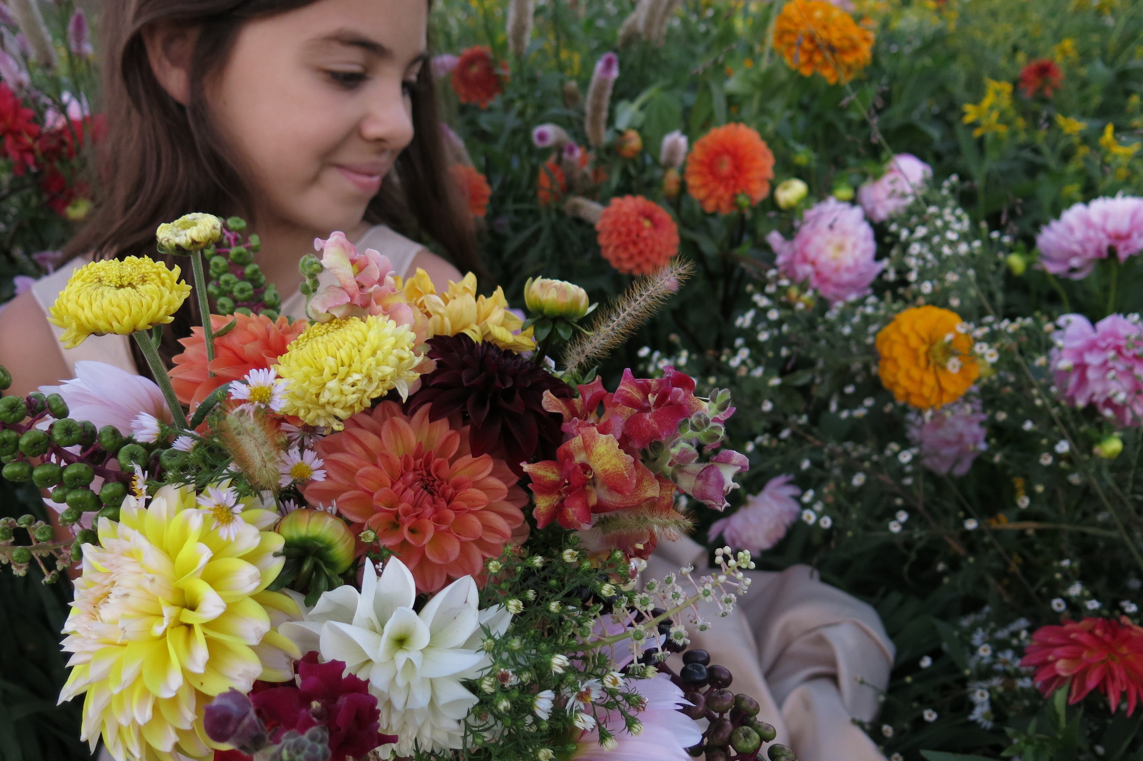 armful of dahlias and more