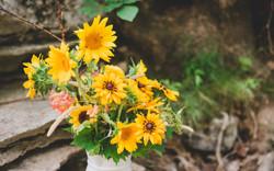 Sunshine yellows