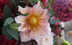 apple blossom dahlia