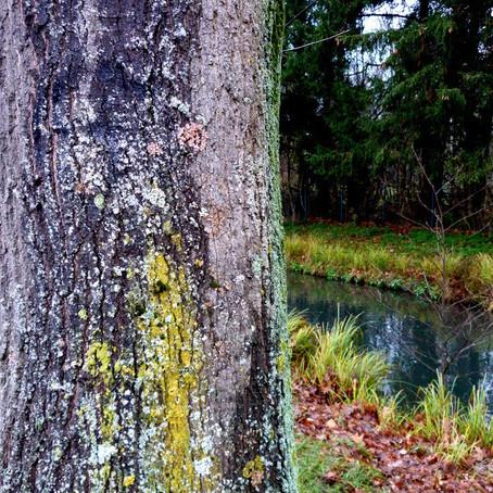 Waldbaden, Social Distancing, Zwangsurlaub und Selbstbesinnung