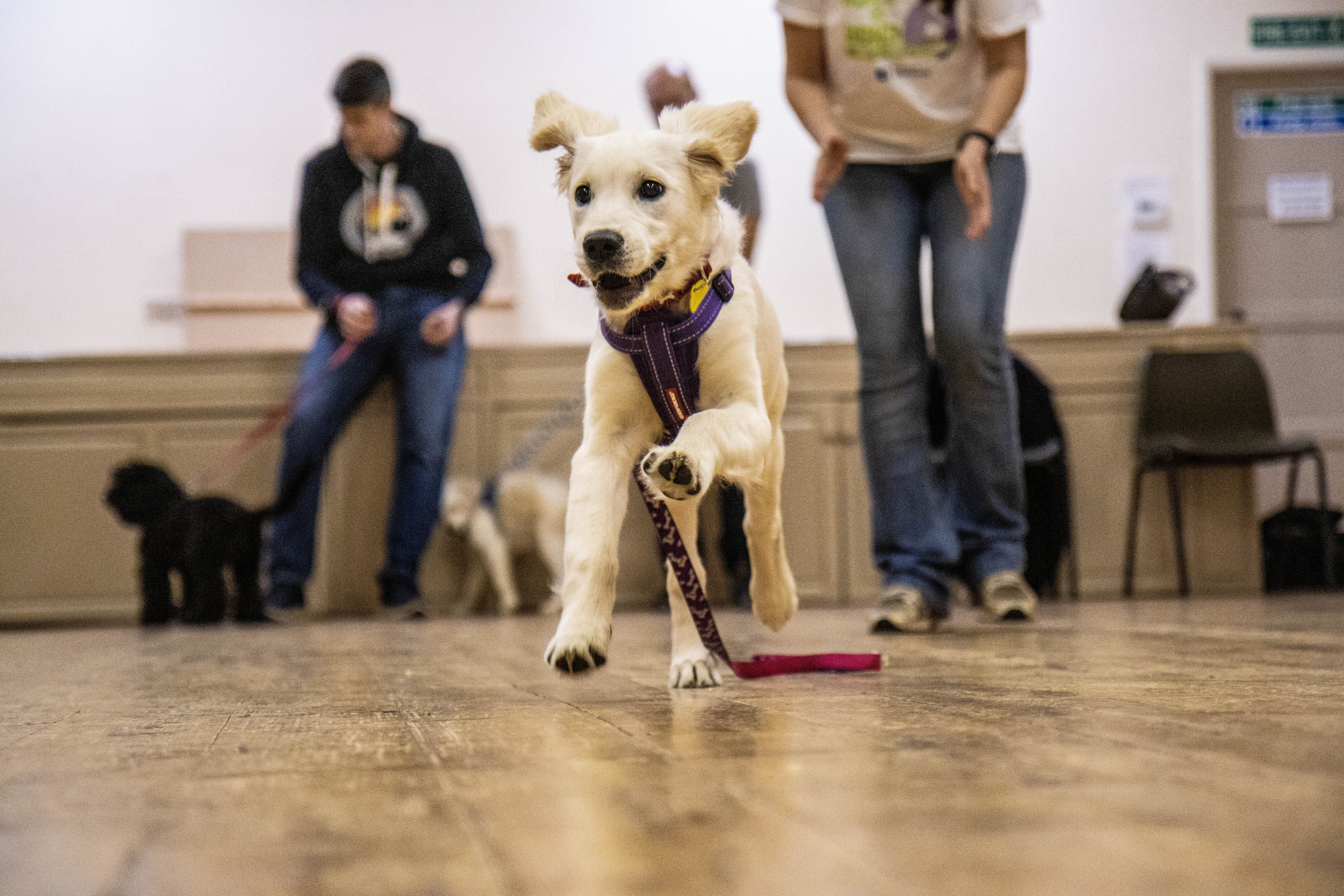 *6pm* Cotgrave 5 Week Puppy Course