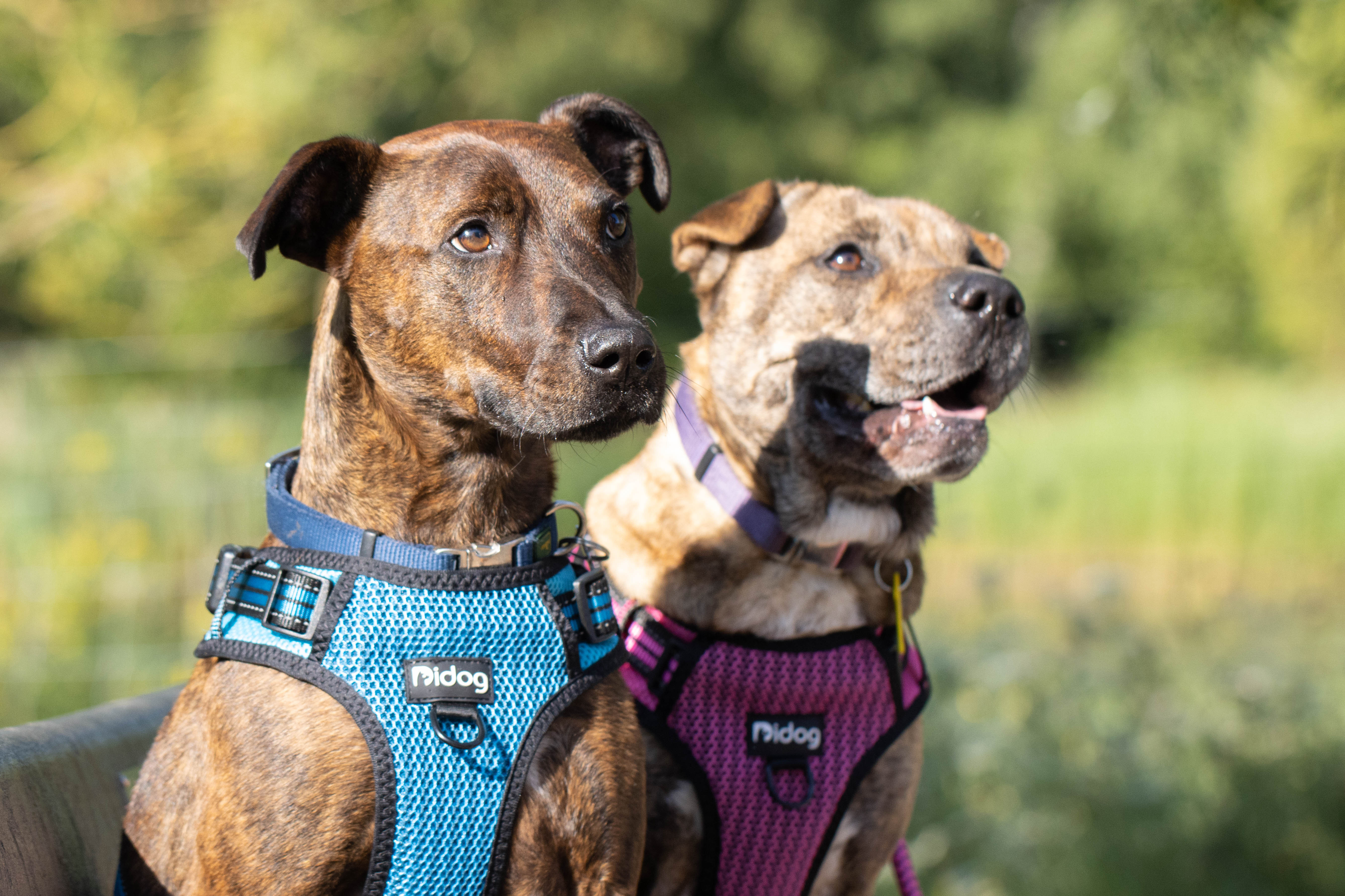 Outdoor mixed dog training (weekly)