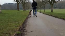 Aj loose lead walking