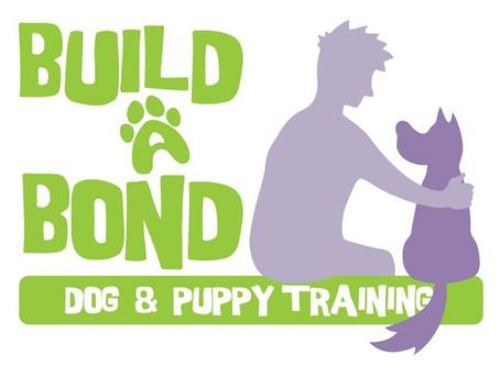 Why did I Start Build A Bond dog training?