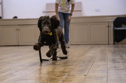 another running dog in class