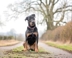 Mya, clients dog