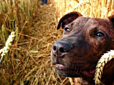 My journey into dog training
