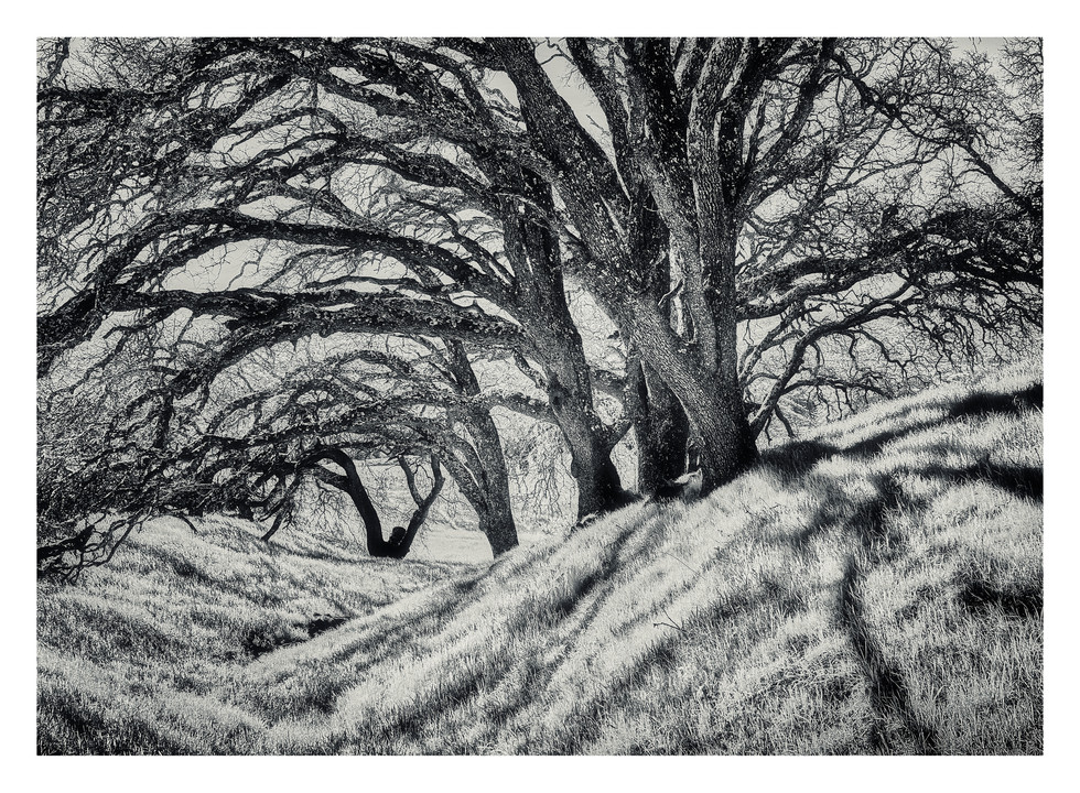 Central CA Intimate Landscapes