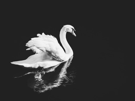 Swanson's Swansong