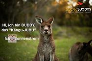Buddy-das-Kängu-JUHU.png