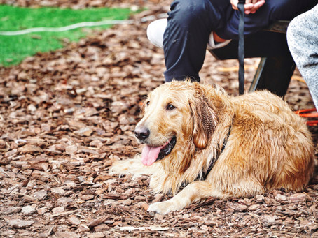 Dogs and Florida Heat: Heat Strokes, Burns & Snake Bites
