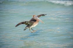marco bird over water