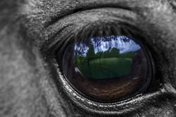 Close up of a eye