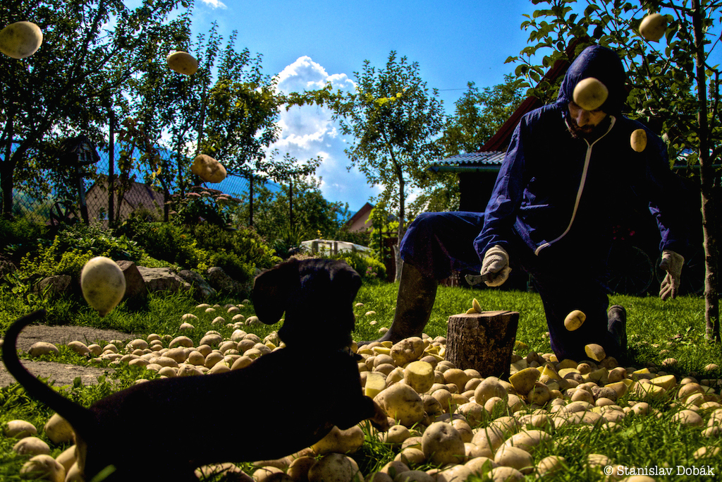 Man figure cutting potatoes with dog