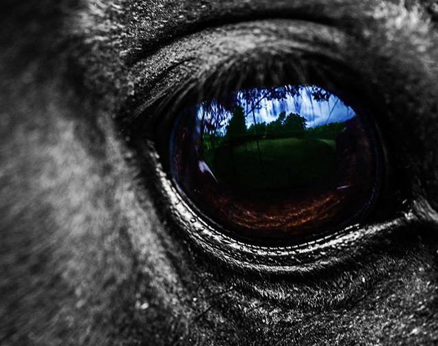 Eye of a pony. #eyes #photography #anima
