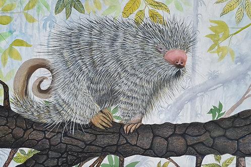 Alan Richer - Ouriço Caixeiro-Parcele em até 10x no Cartão
