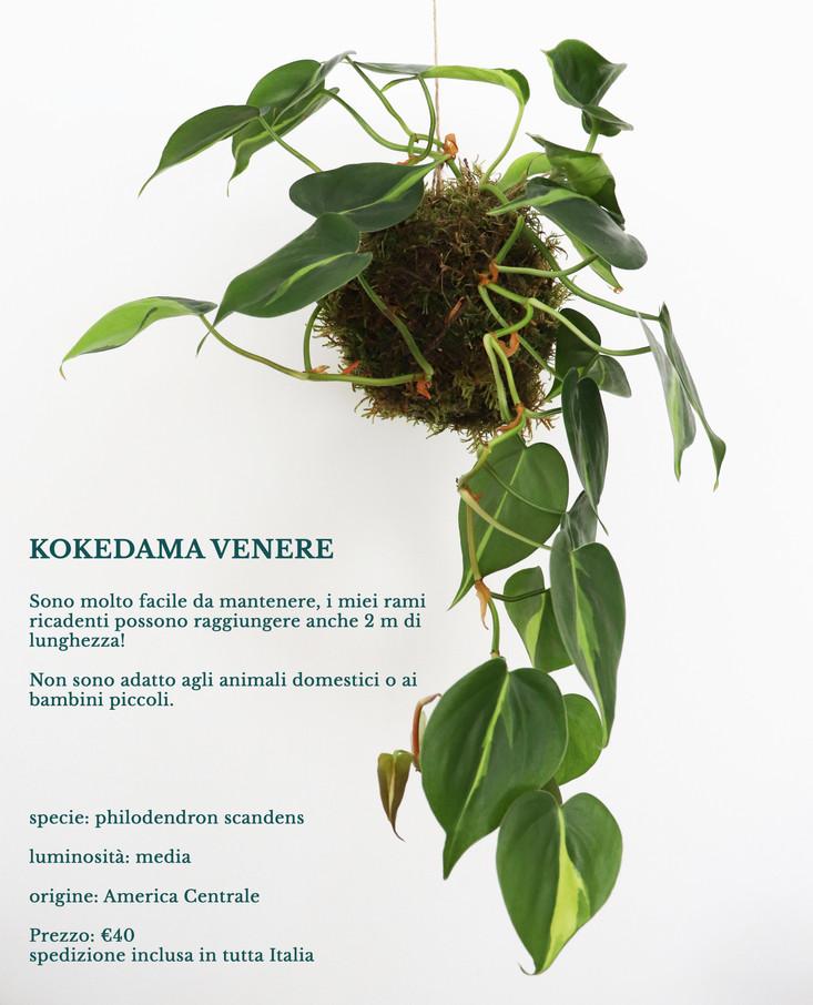 6.kokedama_venere.jpg