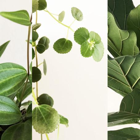 piante da interno: il mio top 3