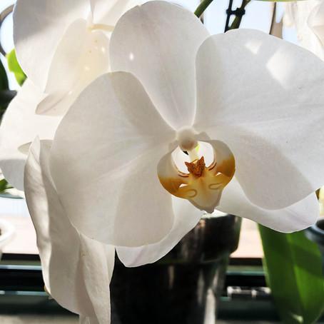 4 semplici consigli per avere delle orchidee bellissime