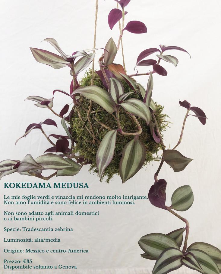3.kokedama_medusa.jpg