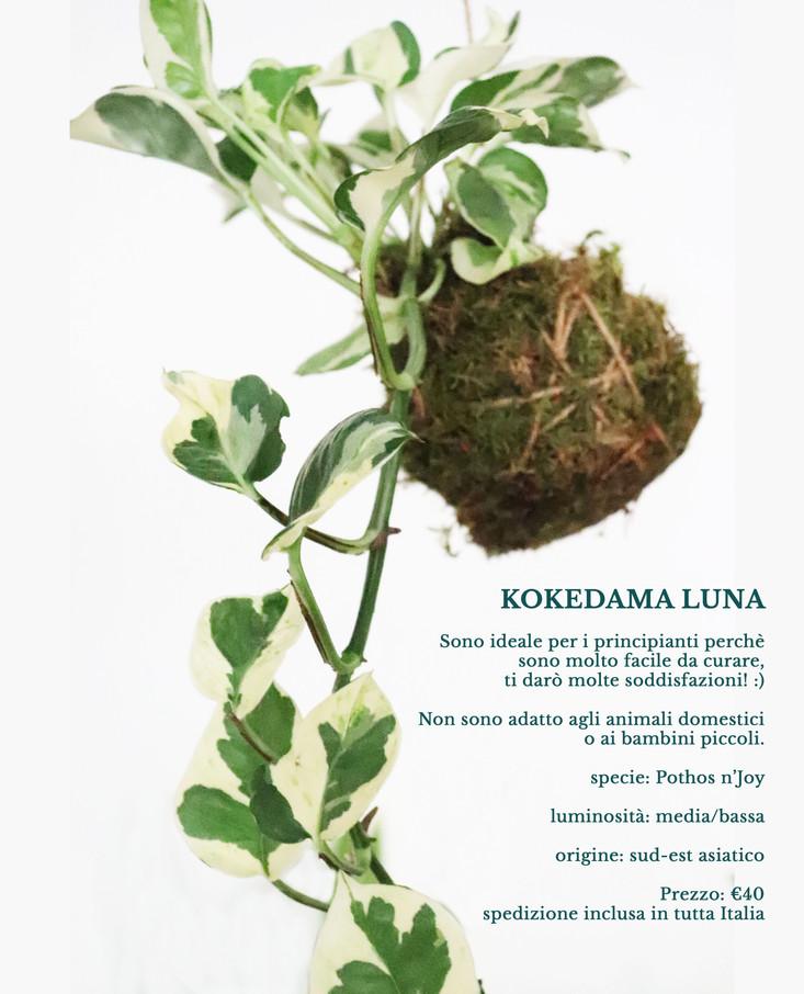 1.kokedama_luna.jpg