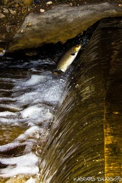 Billes Eko HESa zivju ceļš
