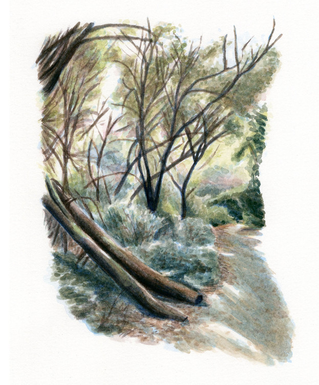 henrycowell_fall_watercolor_edited.jpg