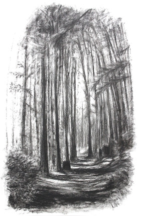 A Wander Through the Woods
