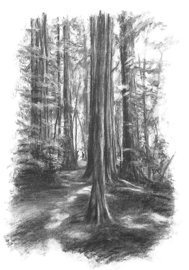 hiker, forest
