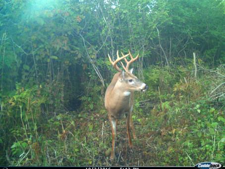 Quality Deer Management (QDM) vs. Trophy Buck Ignorance