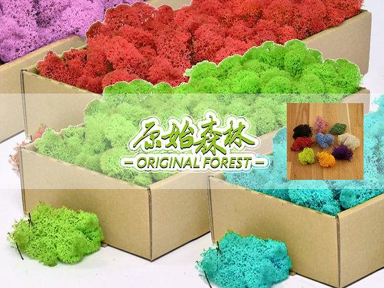原始森林 保鮮空氣苔蘚 (每盒面積約15x15x2cm)