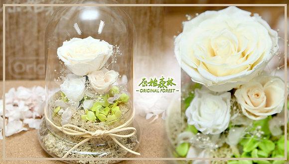 原始森林 香檳白保鮮花盆景(大)