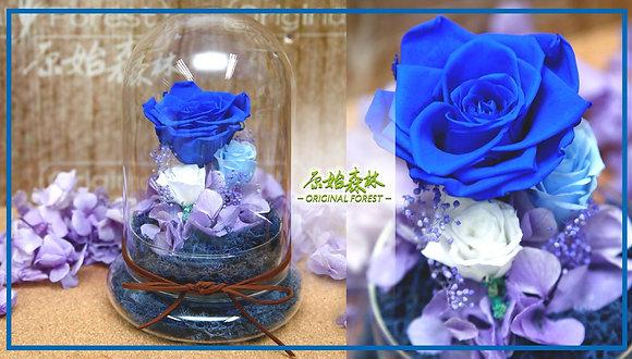 原始森林 深藍紫保鮮花盆景(大)