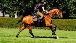 Recherche en biomécanique du cheval