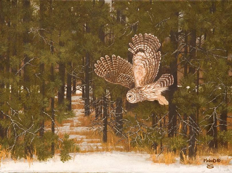 Barred Owl Late Winter Hunt