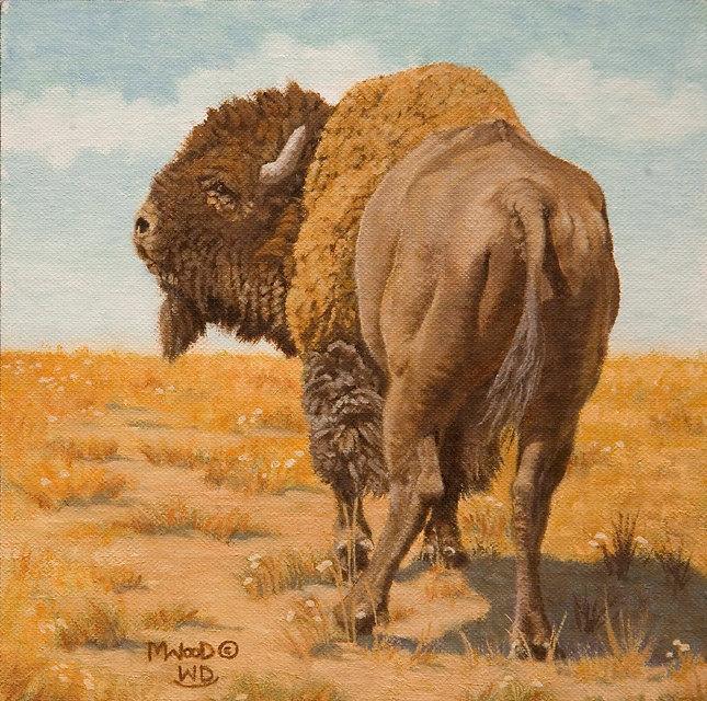 Bison Bull Study