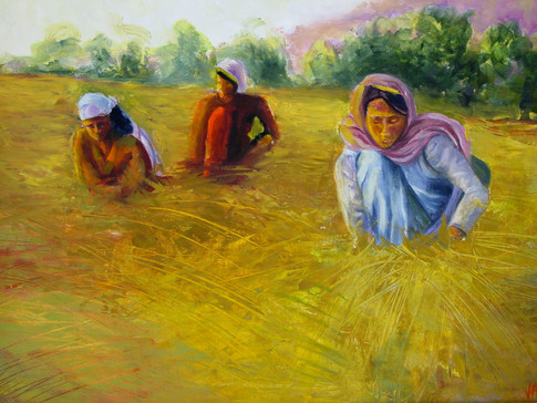 Afghan Fields