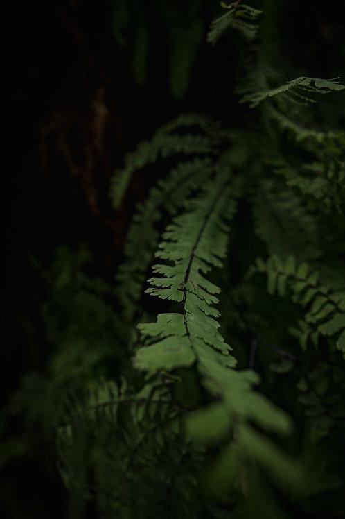 The Leaf | Digital Image